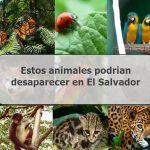 Thumbnail Los animales en peligro de extinción en El Salvador